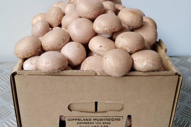 Gippsland Mushrooms